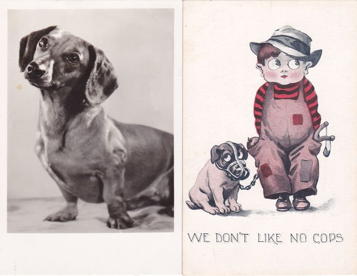 Animals, Dogs, drawn and photographed - Postcards (Collection of 94) - 1906-1956