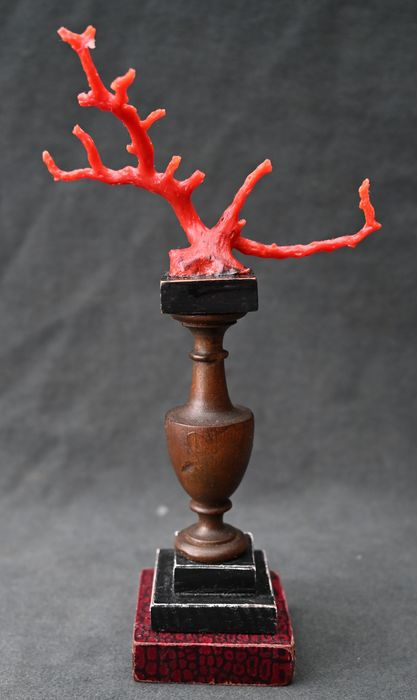 Fragment of red coral on foot, cabinet of curiosities, art chamber - Wood, red coral - Early 20th century