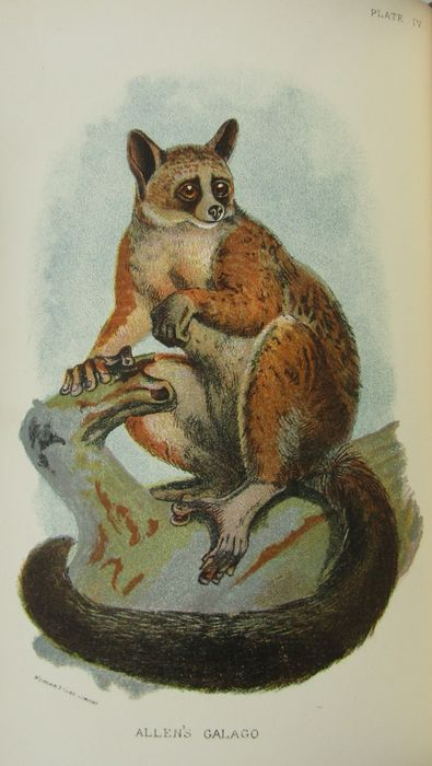 H.O. Forbes & Richard Lydekker - A Handbook to the Primates & Marsupialia. 2 volumes in one binding - 1896