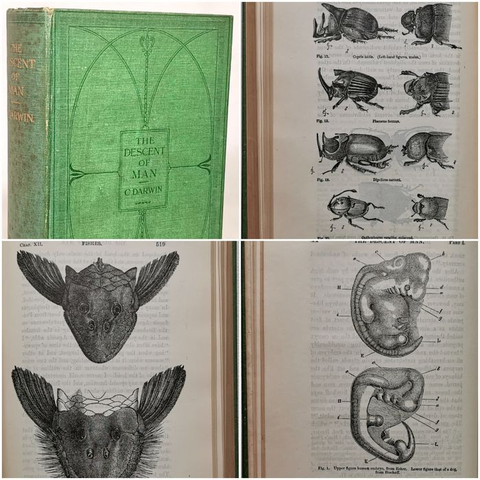 Charles Darwin, M.A., F.R.S. - The Descent of Man and Selection in Relation to Sex - 1913