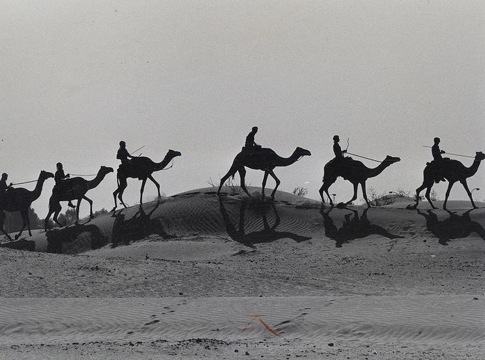 Horst Faas (1933-2012) - Row of Camels in Silhouette, 1972