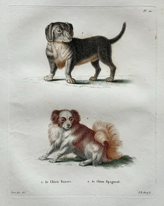 Lot of 2 rare folio engravings by Jean Baptiste Huet [1745-1811] after Nicolas Huet the Younger - 2 folio engravings depicting 4 breeds of domestic dog - Coloured stipple engravings (crayon manner)