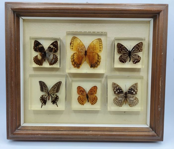Collection of tropical butterflies in resin blocks finely framed - Lepidoptera - 5×34×39 cm