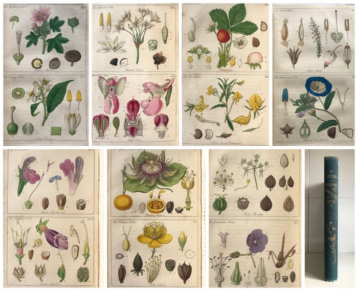 John Lindley - Ladies Botany: the Study of the Natural System of Botany [25 chromolithographic plates] - 1840