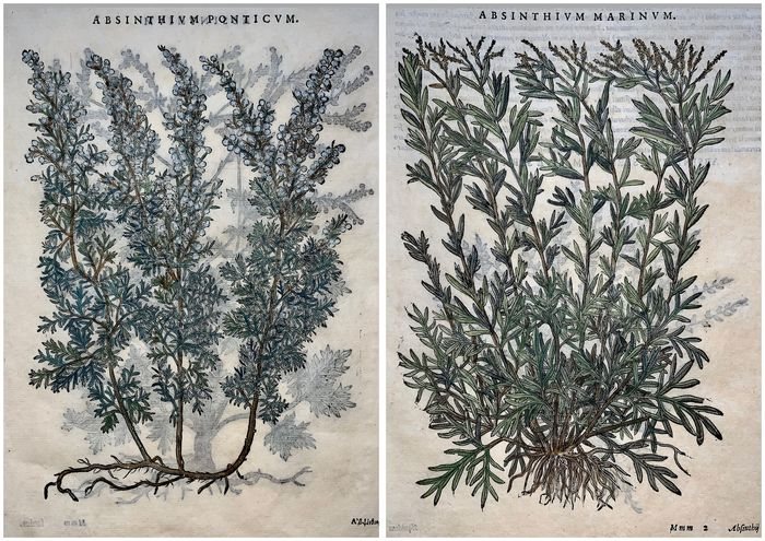 Lot of 2 leaves with 4 large woodcuts by Giorgio Liberale; W. Meyerpeck - Wormwood, Artemisia - Hand coloured - 1565