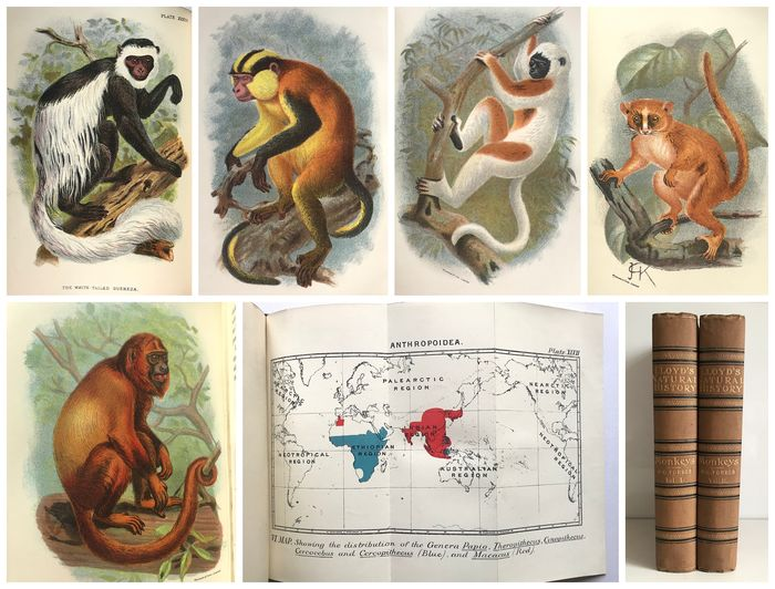 Henry O. Forbes - Lloyd's Natural History A Handbook to the Primates Volumes 1 and 2 [49 plates] - 1896