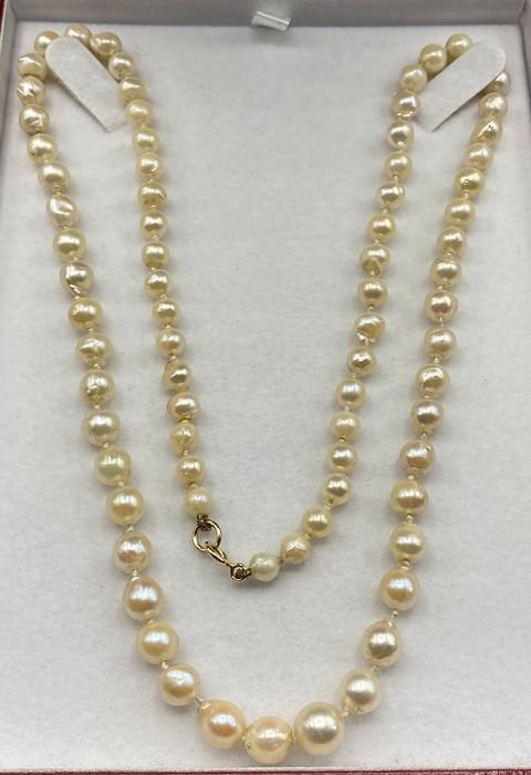 NO RESERVE PRICE - 18 carats Or jaune - Collier - Perles