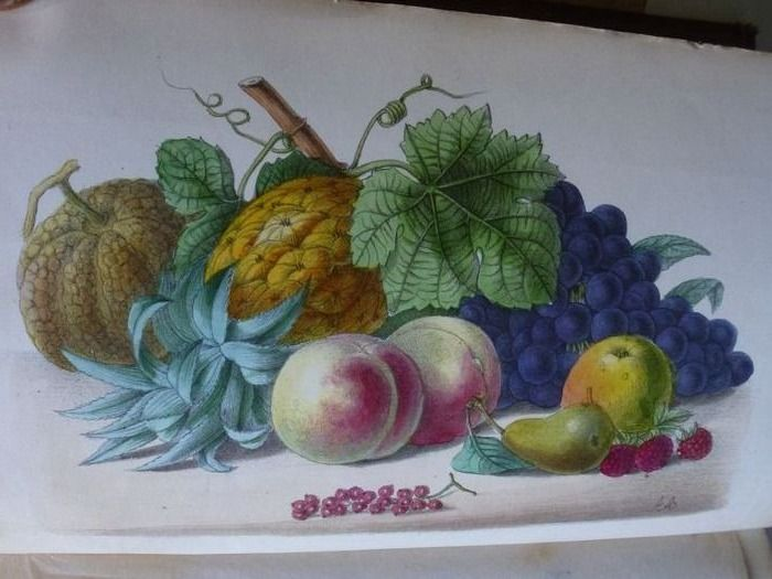 George Glenny - The culture of fruits and vegetables - 1872
