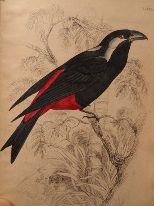 William Swainson / William Jardine / Royal College of Physicians of London. - The naturalist's library. Ornithology. Vol. X, Flycatchers. - 1838