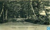 RUURLO, - Berkenlaantje langs Lochemsche weg.