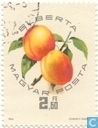 National apricots exhibition