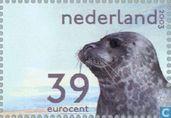 Dutch Wadden