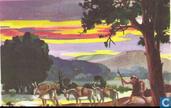 Licht vervoer per ezel