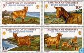 1980 chèvres (GUE 43)