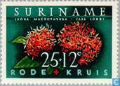 Suriname Croix-Rouge
