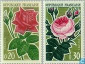 1962 Roses (FRA 564)