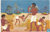 Hun schepen op de wal getrokken, zijn scheepslieden bezig het graan te oogsten