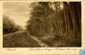 Ruurlo Boschlaan langs Lochemsche weg.