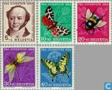 Papillons et les insectes