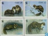 WWF-Pine Marten