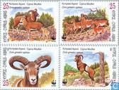 WWF - De Cyprus Moeflon