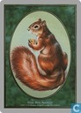 Squirrel token card