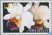 Orchidieeën