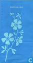 KLM (22) Flowers type 02