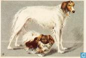 Voor het Kind - Hond: Aristocraten Barzoi en Pekingees