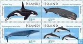 1999 Walvissen en dolfijnen (IJS 371)
