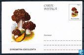 Champignons carte postale