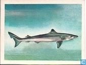 Ruwe haai