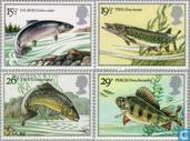 British river fishing
