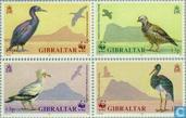 WWF-Vögel von Gibraltar