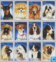 2004 chiens (NA 376)