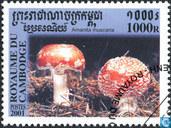 Mushrooms Kambodscha