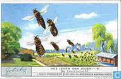Im Bienen-Staate