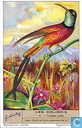 Kolibris