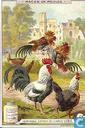 Hühner-Rassen