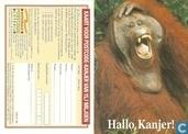 "B001721 - Postcode Loterij ""Hallo Kanjer"""