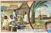Madagaskar, das Land der Hova