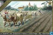 Die Geschichte des Ochsen