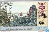 Wie und warum die Blumen Insekten anlocken