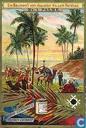 Die Baumwelt vom Äquator bis zum Nordcap