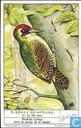 Klettervögel