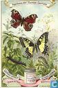 farfalle dell'Europa centrale