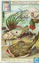 Seefische