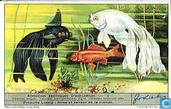 pesci esotici d'acquario