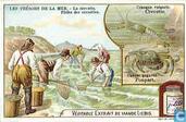 Schätze des Meeres