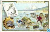 Fischfang II